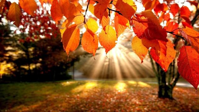 autumn-02.jpg